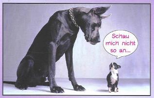 Deutsche dogge und katzen